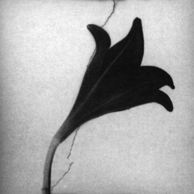 Sans titre #19, série Fêlures, Anaïs Boudot